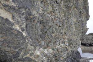 枕状溶岩が観察できる岩